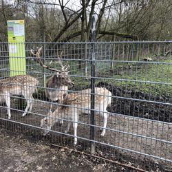 Tierpark Alsdorf Eventlocation Tagungsstatte Annastr 2 6