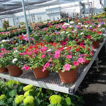Malmborg S Garden Center And Greenhouse Nurseries Gardening