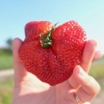 Lewis Strawberry Nursery Farm 48 Photos 27 Reviews Fruits Veggies 6517 Gordon Rd Wilmington Nc Phone Number