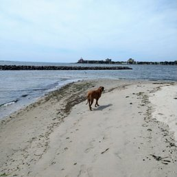 Photo of Plumb Beach - Brooklyn, NY, United States. It seems that the crusty ole seagull never saw one of these before. #rhodesianridgeback