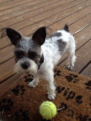 All Pets Considered 2614 Battleground Ave Greensboro Nc Pet