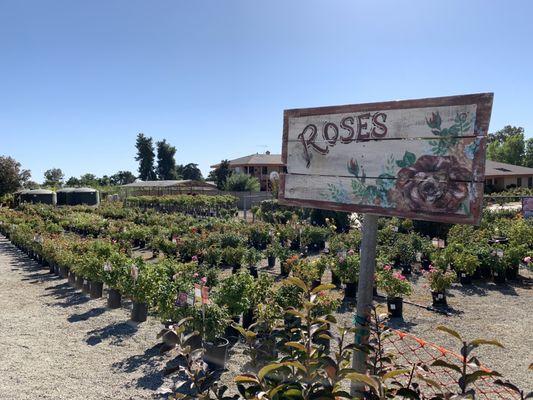 Cherry Valley Nursery Landscape