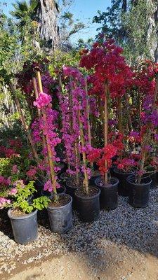 Halls Plant Nursery 46385 Camaron Rd