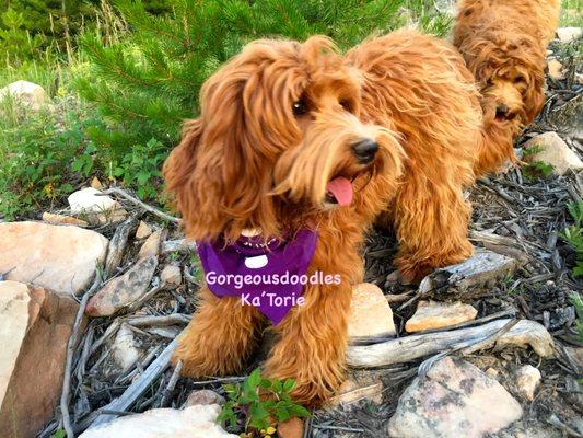 Gorgeous Doodles Granby Co Pet Services Mapquest