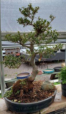 All Shapes Bonsai Nursery 230 Everitt Rd Ringoes Nj Nurseries Mapquest
