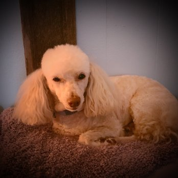 Pampered Pets Grooming Salon Updated Covid 19 Hours Services
