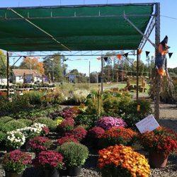 Countryview Farm Nursery Nurseries Gardening 599
