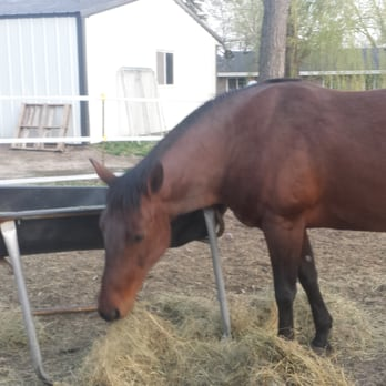All Pets Veterinary Hospital Equine Service Veterinarians 26233 2nd St E Zimmerman Mn Phone Number Yelp