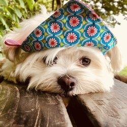 Pet Stores In Bietigheim Yelp