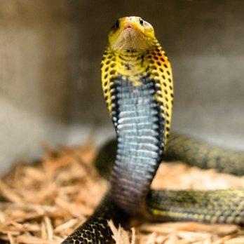 Animal World Snake Farm 484 Photos 207 Reviews Zoos 5640 Ih 35 S New Braunfels Tx Phone Number Yelp