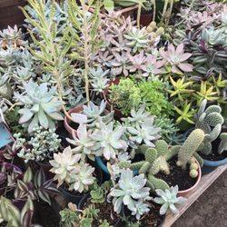Santa Rosa Nursery 14 Photos Nurseries Gardening Ne
