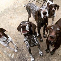 The Village Pets Pet Sitting and Pet Care - Atlanta, GA