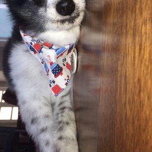 Pet Lovers Animal Clinic on Yelp