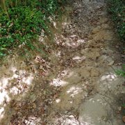 Photo of French Park - Cincinnati, OH, United States. Erosion on the trail