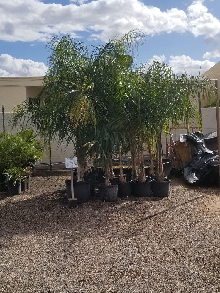 A P Nurseries Lawn Mower 31