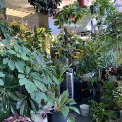 Best Plant Nurseries June