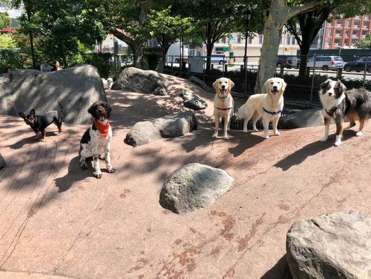 Chelsea Waterside Dog Park 37 Photos 24 Reviews Dog Parks 11th Ave W23rd St Midtown West New York Ny Yelp