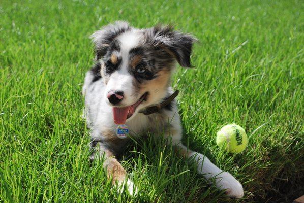 Quality Puppies Usa Ocala Fl Pet Shops Mapquest