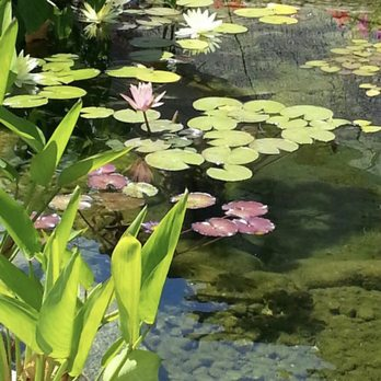 Exquisite Ponds And Gardens 10