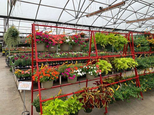 Houston Garden Centers 43 Photos 52 Reviews Nurseries