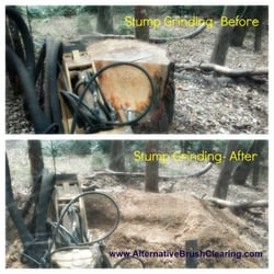 Alternative Brush Clearing Tree Services Livingston