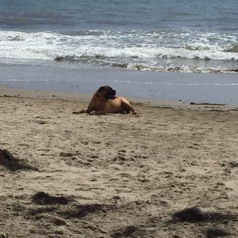 Photo of Arroyo Burro Beach - Santa Barbara, CA, United States. Dog beach