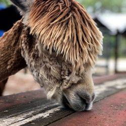 Pets in Homosassa - Yelp