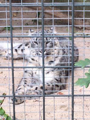 eintrittspreise krefelder zoo