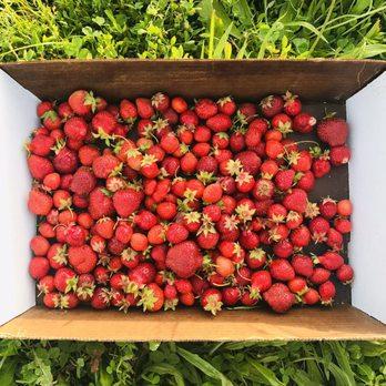 Rowe S Produce Farm 38 Photos 20 Reviews Farmers Market 10570 Martz Rd Ypsilanti Mi Phone Number