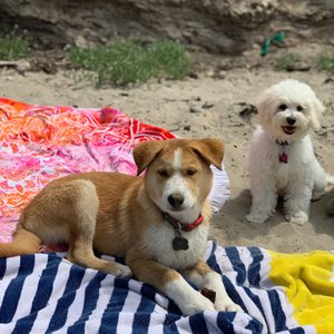 Photo of Arroyo Burro Beach - Santa Barbara, CA, United States. King Louie & Mia 3