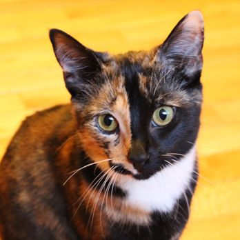 Animal Welfare League Of Alexandria Updated Covid 19 Hours Services 99 Photos 79 Reviews Animal Shelters 4101 Eisenhower Ave Alexandria Va Phone Number Yelp