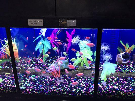 Kee S Aquarium Pets 8190 23 Mile Rd Shelby Township Mi Pet Shops Mapquest