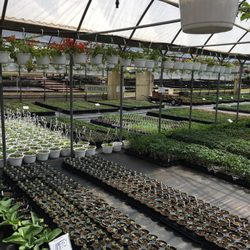 Nurseries Amp Gardening In Burleson Yelp