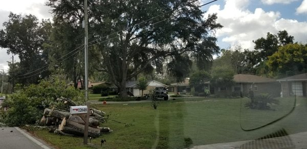 Lee S Trees Jacksonville Fl Tree Services Mapquest