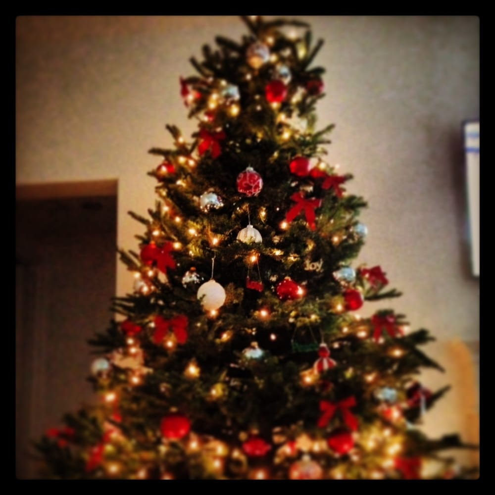 Pinery Christmas Trees - 27 Photos & 28