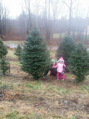 Christmas Tree Farm 13214 Belscher Rd
