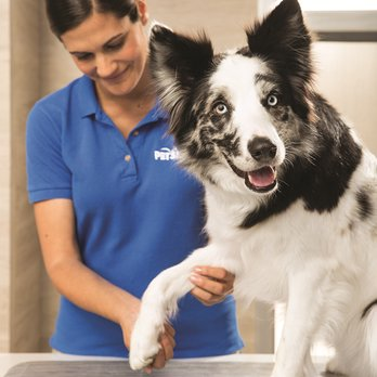 Petsmart Updated Covid 19 Hours Services 42 Photos 74 Reviews Pet Training 7290 W Bell Rd Glendale Az Phone Number Yelp