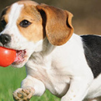 Kota S Center For Canine Behavior Dog Walkers 3740 S Grange Ave Sioux Falls Sd Phone Number Yelp