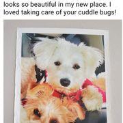 Quality Puppies Usa 11 Reviews Pet Stores Ocala Fl