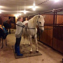 Horseback Riding in Bowmanville - Yelp