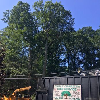 Cheap Charlie S Tree Service 10 Photos 85 Reviews Tree Services 13 Elm Pl Amityville Ny Phone Number Yelp