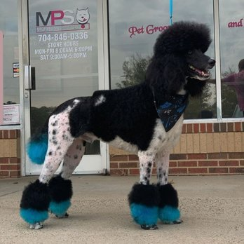 Modern Pet Salon Updated Covid 19 Hours Services 92 Photos 50 Reviews Pet Groomers 13643 Providence Rd Weddington Nc Phone Number Yelp