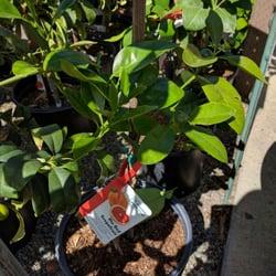 Nurseries Gardening In Los Gatos Yelp