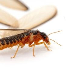 Pest Control In Nipomo Yelp
