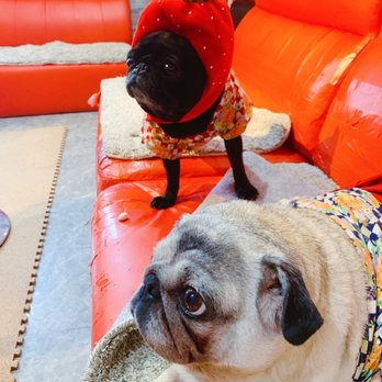Photo of Pug Cafe Living Room - Kyoto, 京都府, Japan