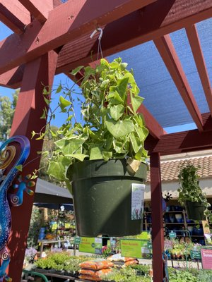 Armstrong Garden Centers Updated