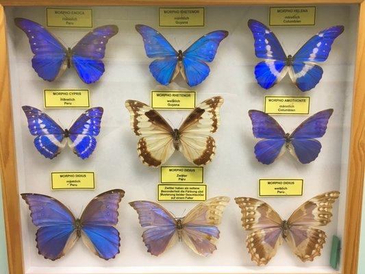 Schmetterlingsfarm Trassenheide 50 Fotos 30 Beitrage Zoo