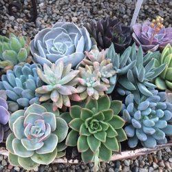 Nurseries Gardening In Cherry Valley