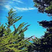 Photo of Lands End - San Francisco, CA, United States. A sight even amongst and over the terabithia trees