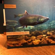 Photo of Autry Museum of the American West - Los Angeles, CA, United States. Salmon is our relative and our friend...